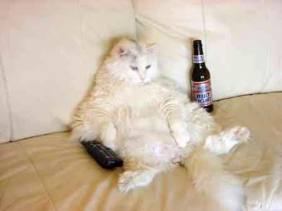 LET ME ALONE cat