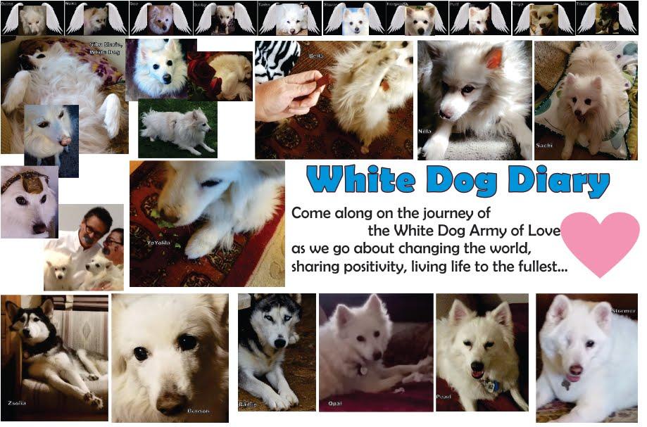 White Dog Diary Online