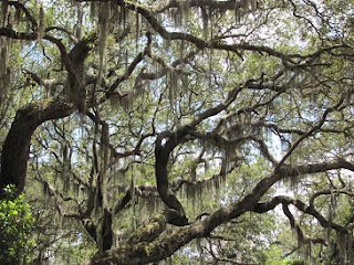 Live Oaks, Ft. George Island, FL, by Mike Shell