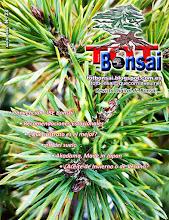 DR 23 TOT Bonsai