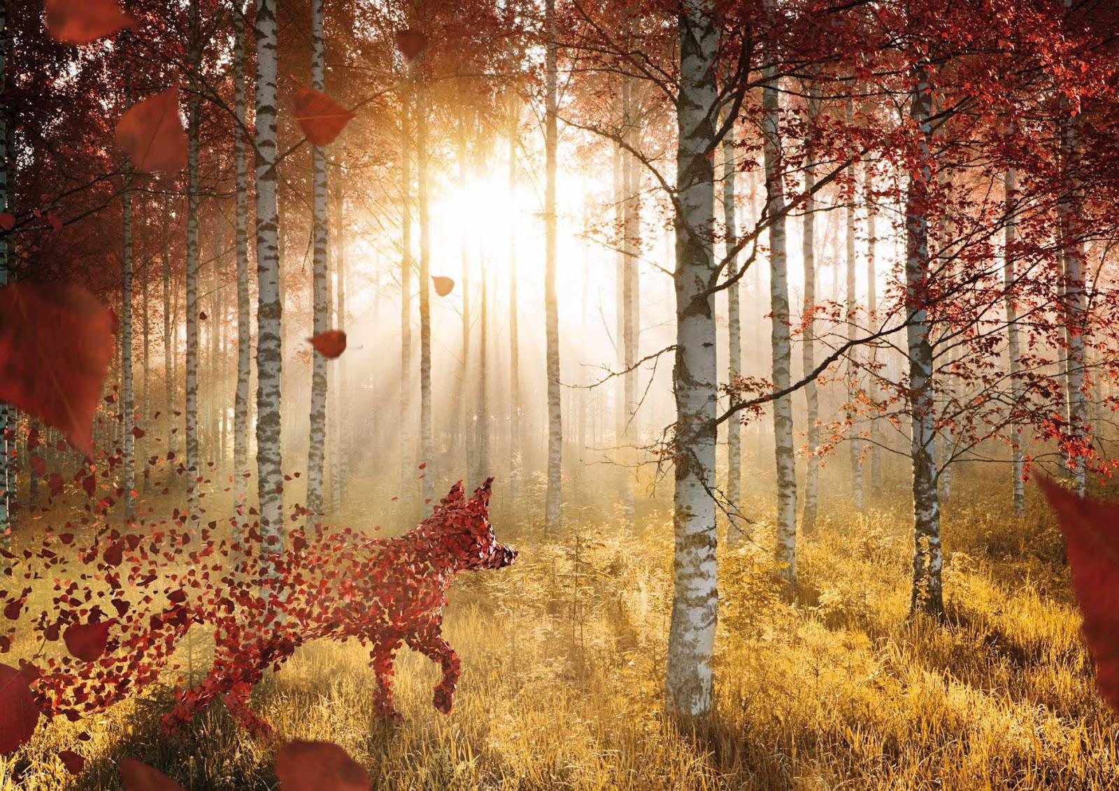 Картинки лиса рыжая