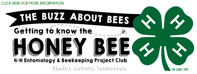 http://www.peachyskeen.com/2015/07/the-buzz-about-bees.html