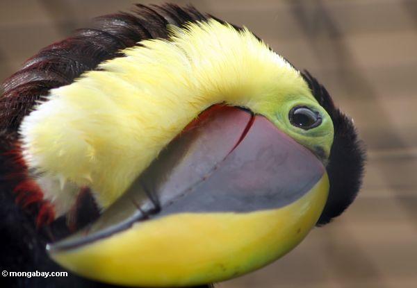 Lauradivenereinteriors introduction to beautiful brazil for Oiseau jaune et noir