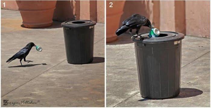 Helping Crow