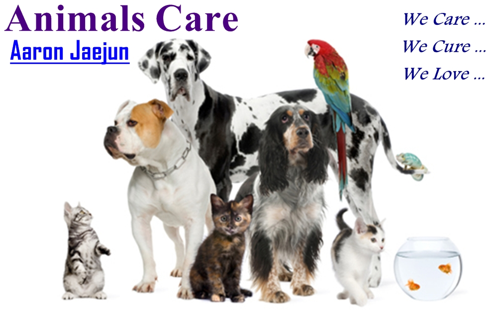 Animals  Care