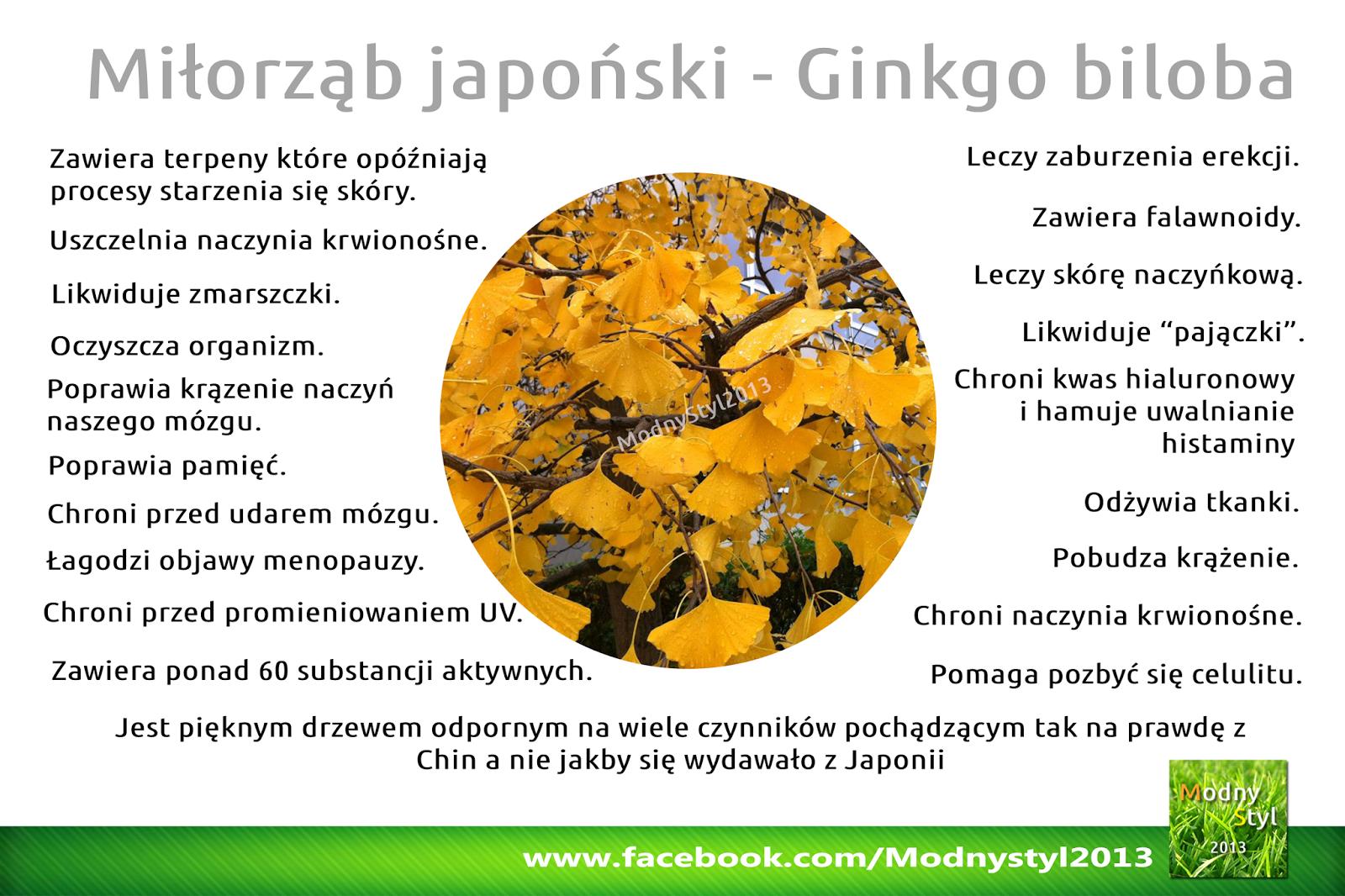Miłorząb japoński czyli ginkgo biloba