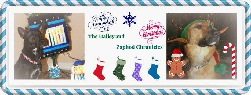 The Hailey and Zaphod Chronicles