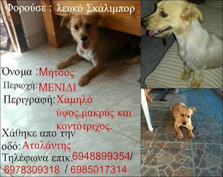 Χάθηκε σκυλάκος στο Μενίδι, μικρού μεγέθους με λευκό σκάλιμπορ
