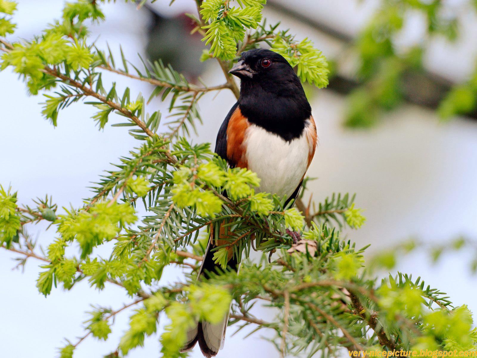 birds wallpapers birds wallpaper bird wallpaper bird