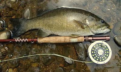 The smallmouth fly box favorite smallmouth bass fly rod for Fly fishing for smallmouth bass