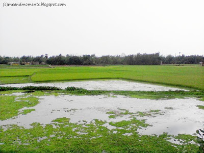 indian paddy field, life of villagers