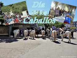 DÍA DE LOS CABALLOS 2019