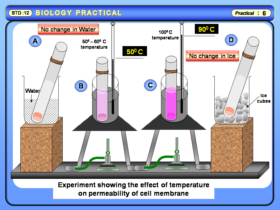 effect of organic solvents on cell membrane permeability Organic solvents increase membrane fluidity and affect bile flow and k+  effects  of various organic solvents on bile flow, plasma membrane.