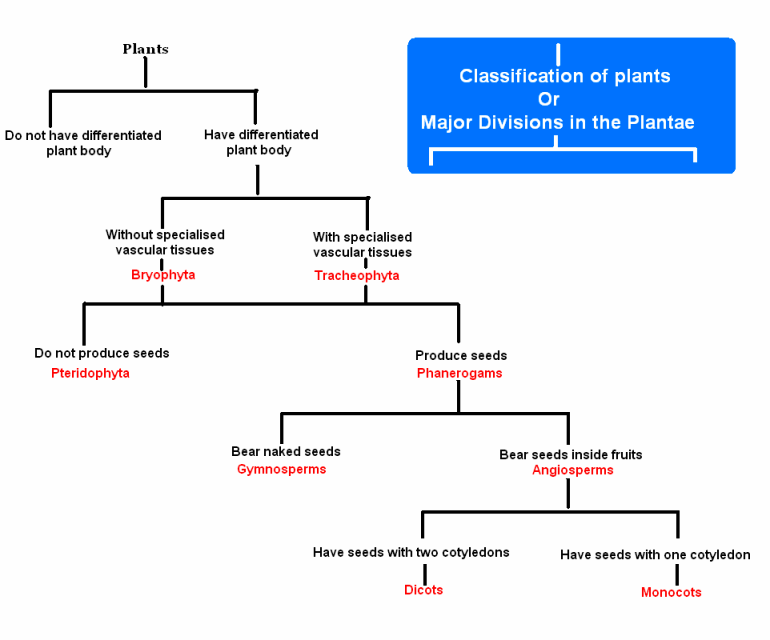 write flow charts of animalia and plantae | Meritnation.com 10 Examples Of Monocot Plants