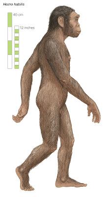 primeros hombres Homo habilis