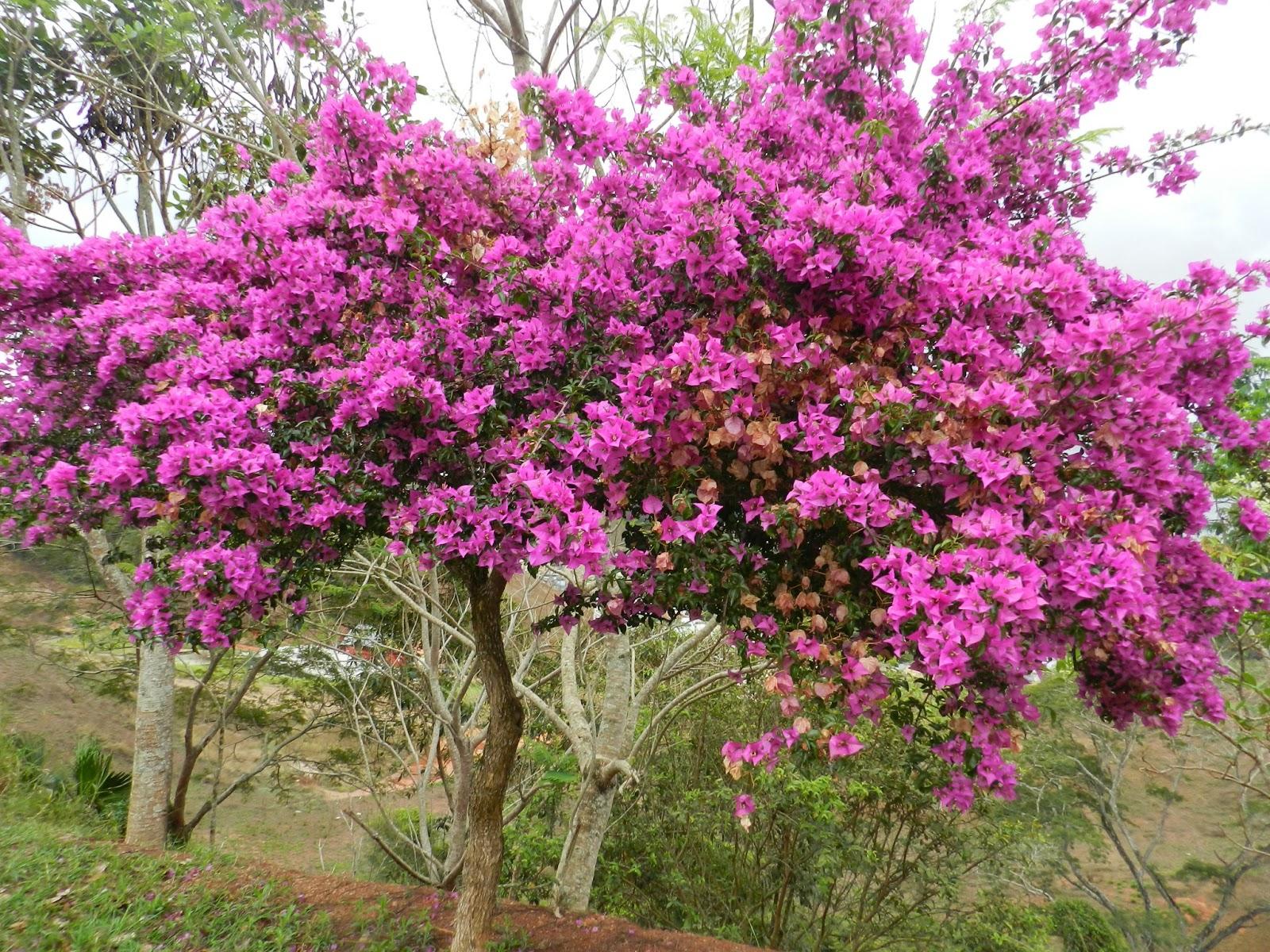 Maria da saudade arbustos para jardins for Arbustos jardin pequeno