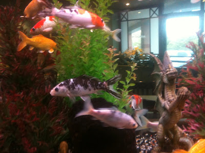 Fish at the Mandarin restaurant photographed by Ana Tirolese
