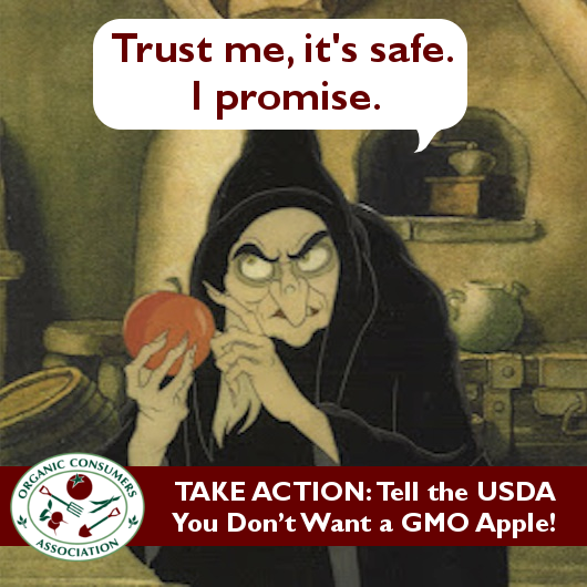USDA Set to Approve GMO Apple