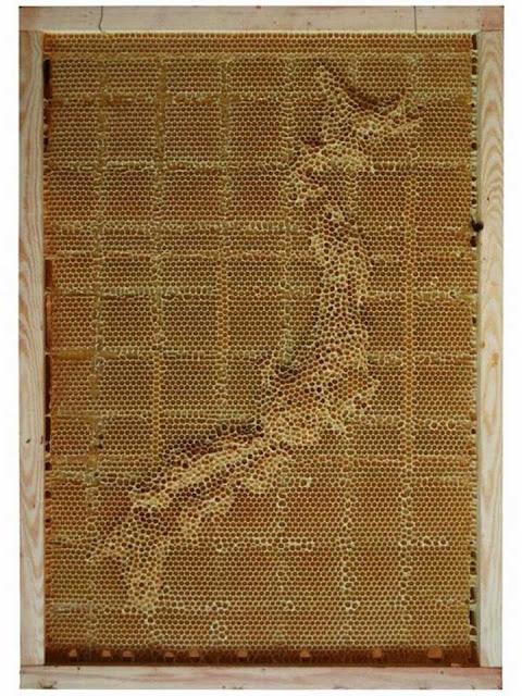 Luar-Biasa-Ternyata-Peta-Dunia-ini-Dibuat-oleh-Lebah4