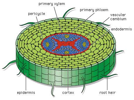 Batang Tumbuhan