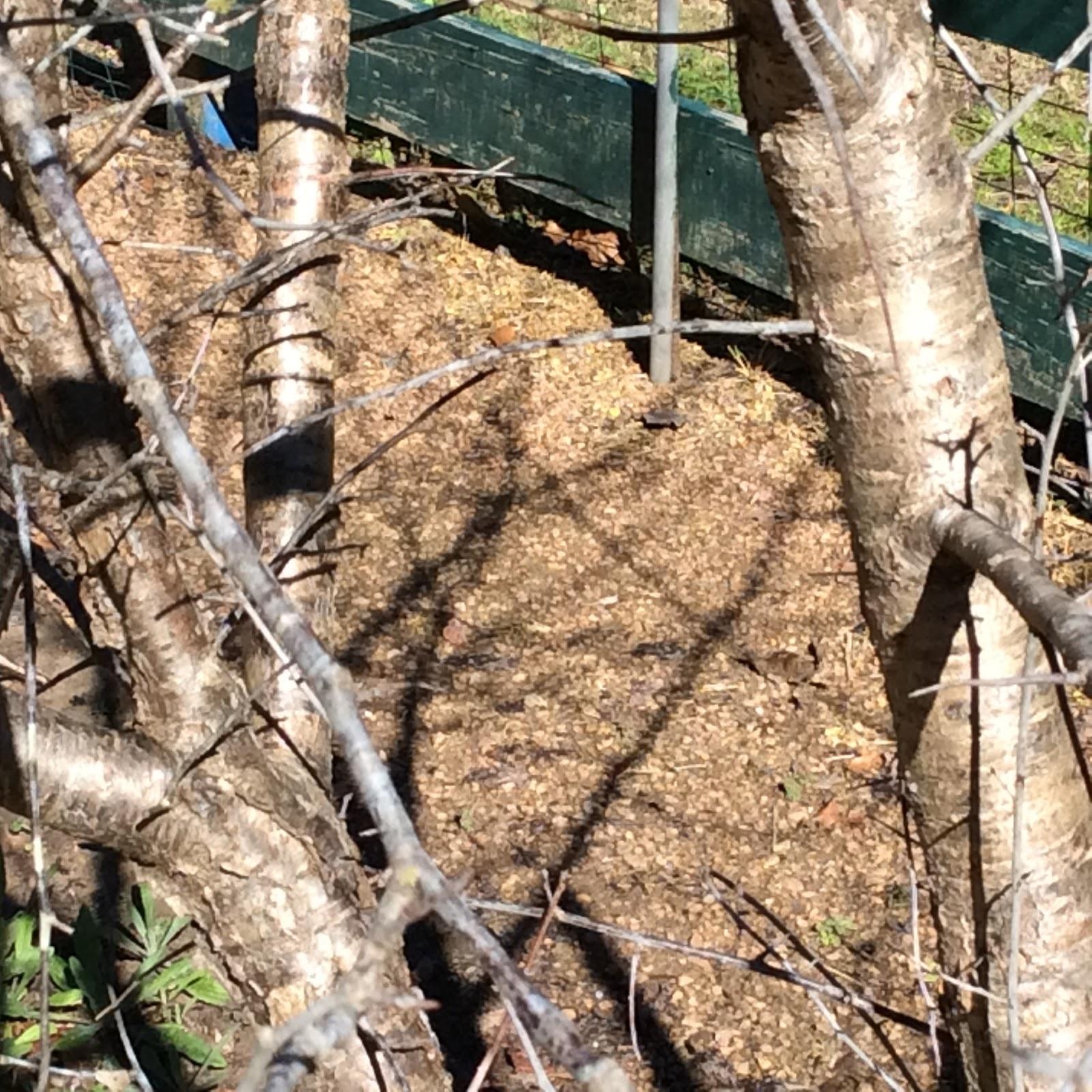 Lisa Bonassin\'s Garden: The Bark of the Mexican Plum Tree January 17 ...