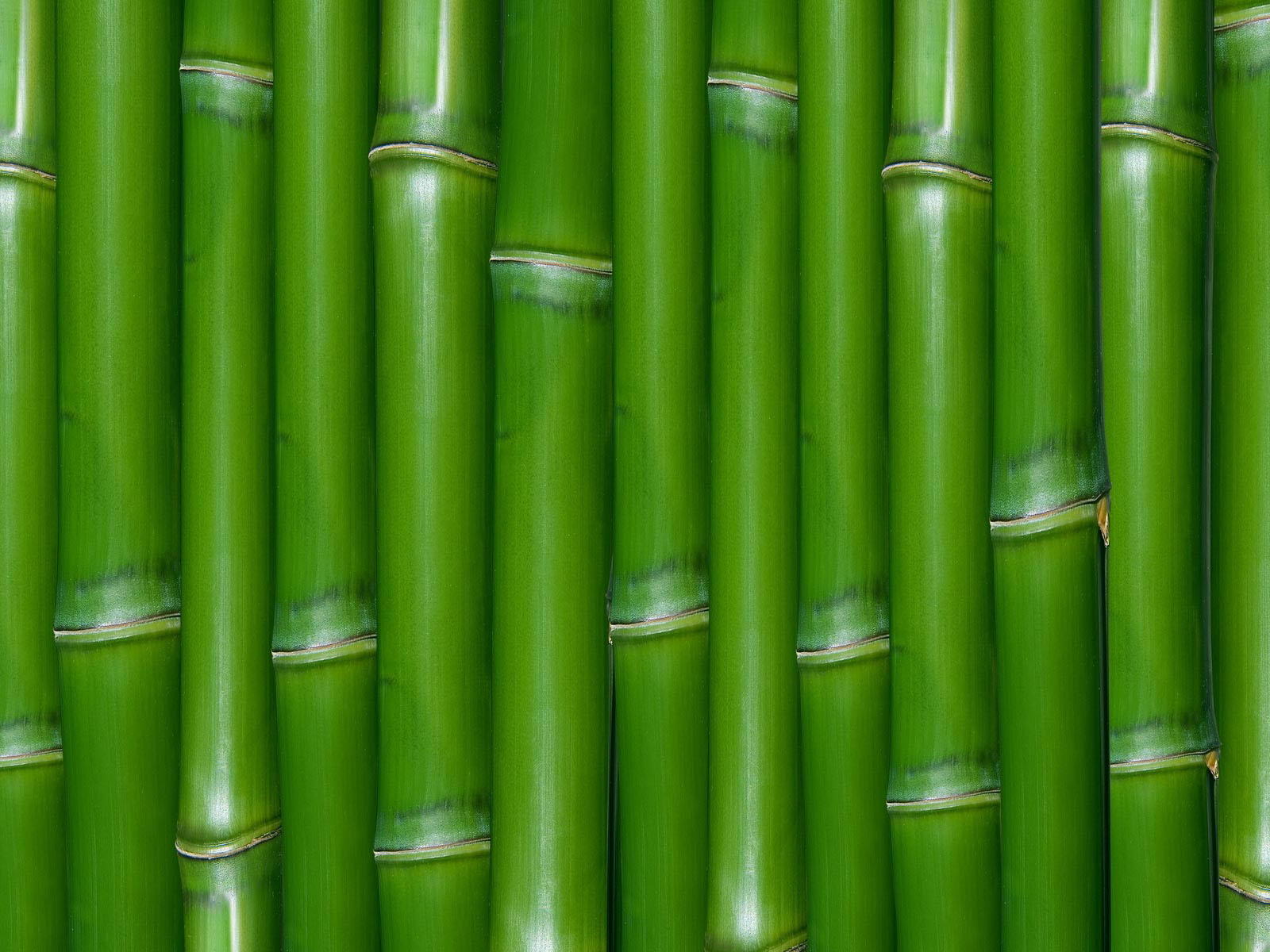Wallpapers bamboo wall wallpapers for Bamboo wallpaper for walls