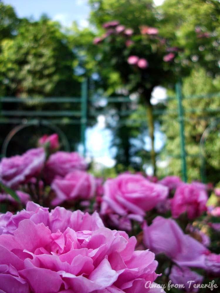 Dublin Iveagh Gardens