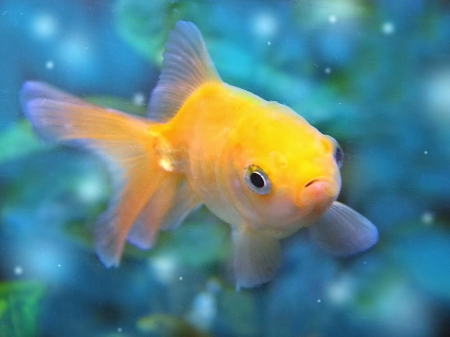 Beautiful Wallpapers For Desktop Beautiful Small Fishes