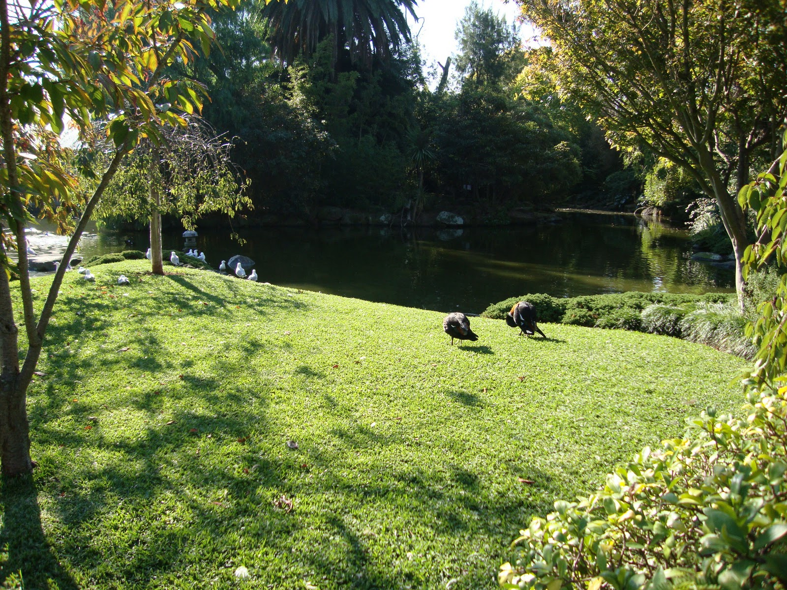 Article : The Melbourne Zoo a Tap To Nature ~ one for all and to share
