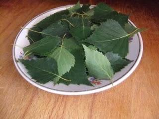 medicinal siberian chaga mushroom recipe 02