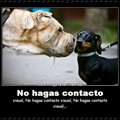 No hagas contacto visual, No hagas contacto visual...