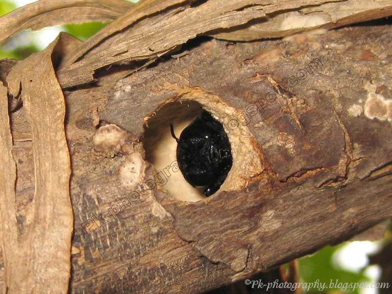 Pictures of carpenter bees nests