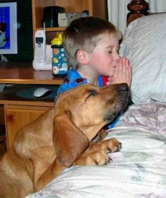 boy child praying with pet picture