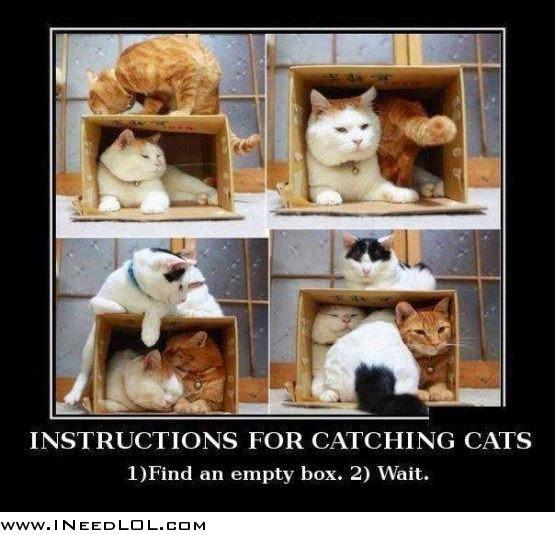 cara tangkap kucing