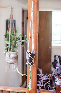 macrame, plant, hanger, basket. craft, philodendron