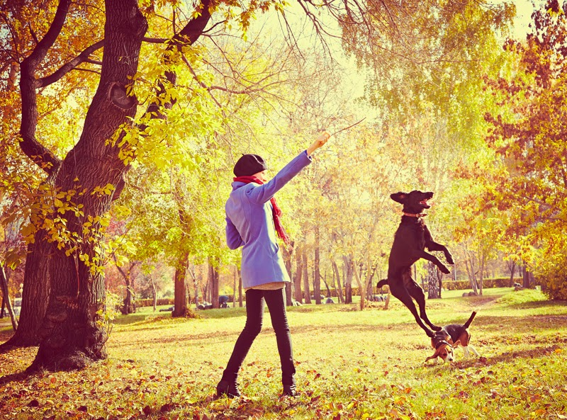 A young woman and her dog play with a stick in the park