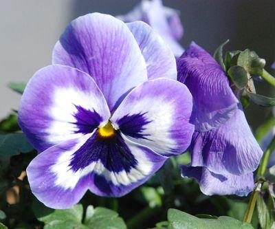 blomsternavne på engelsk