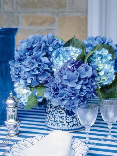 A spruce of blu...