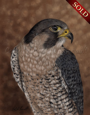 Peregrine Falcon Bird Painting in Pastel by Colette Theriault