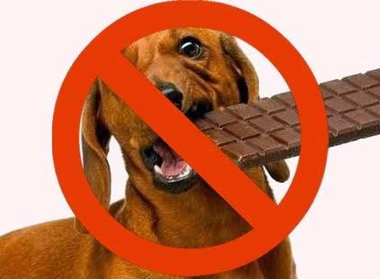No le des chocolate a tu perro y gato