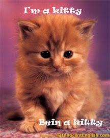 Cute Kitty @_@