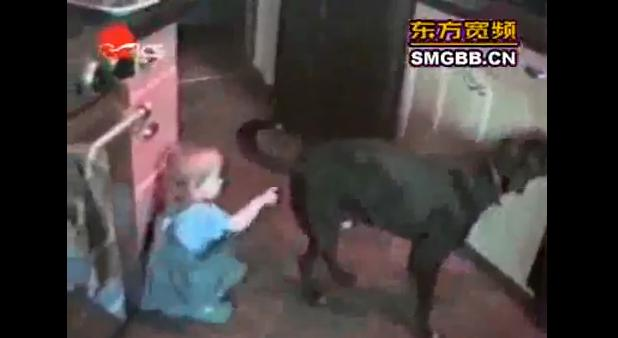 The world's most funny dogs video   The World's Funniest Videos