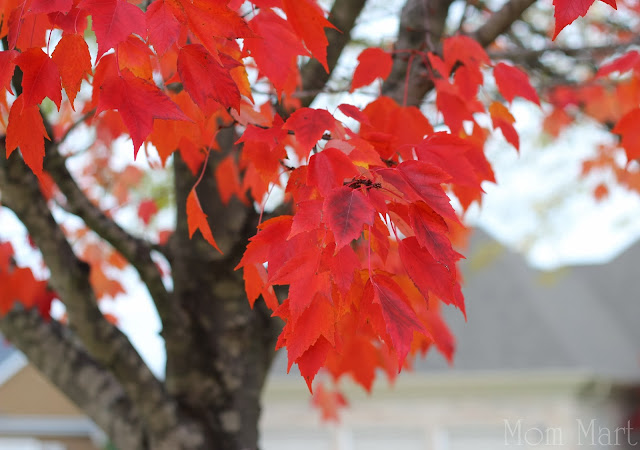 Fall in Illinois with red tree leaves