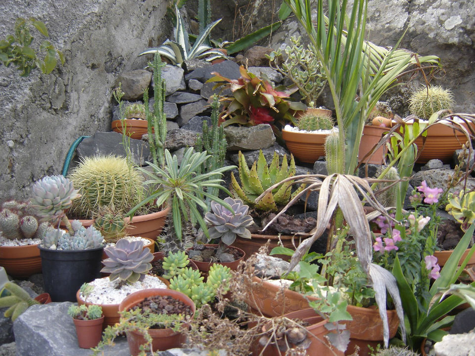 mini jardim cactos suculentas : mini jardim cactos suculentas:Exemplos de Mini Jardim de cactos e ou Suculentas