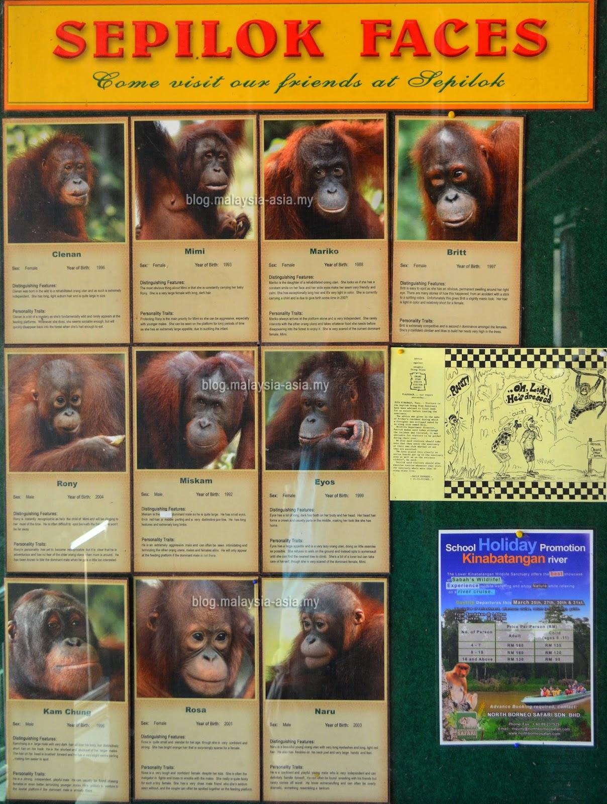 Sepilok Orangutan Names