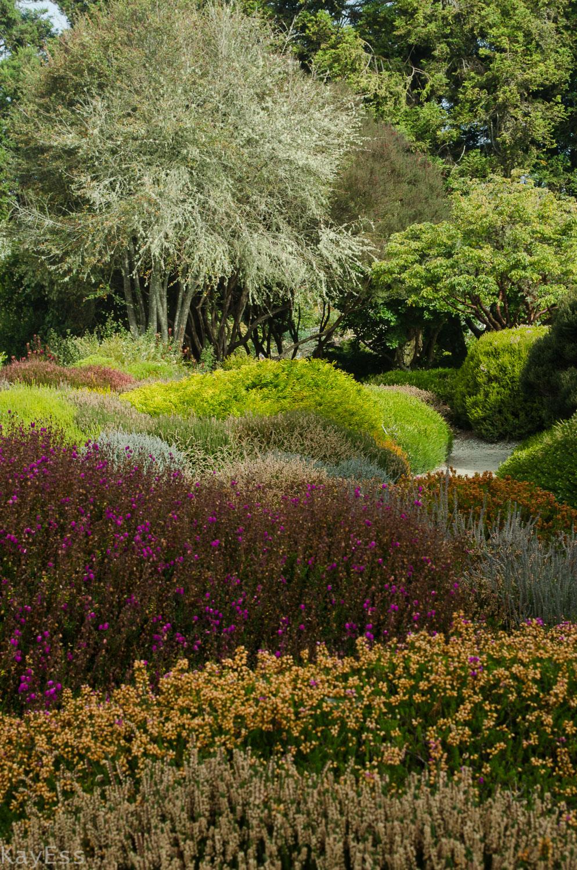 Mendo Botanical