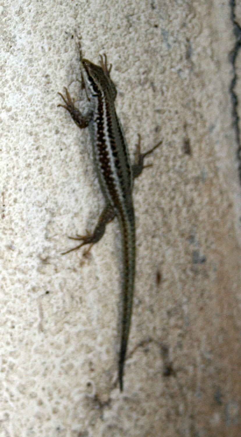 Little lizard on the wall