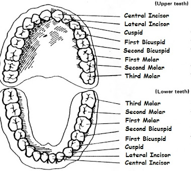Teeth Map