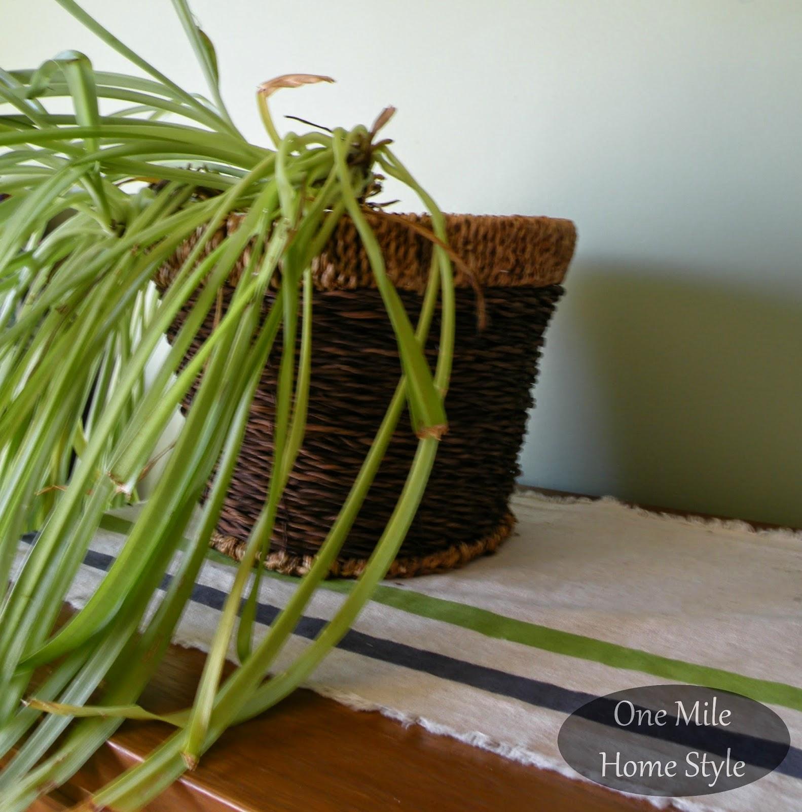 Plant inside a woven basket