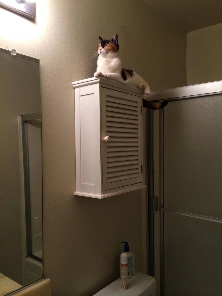 Funny cats - part 97 (40 pics + 10 gifs), cat pictures, cat sitting on top of shelf